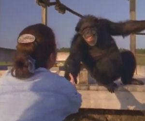 Incontra le scimmie che aveva salvato anni prima, ecco la reazione