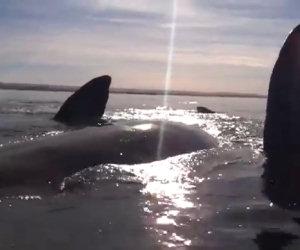 Kayak sollevato da una balena