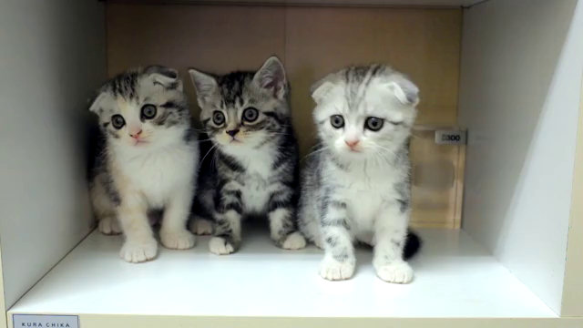 Ben noto Video divertenti di gatti - Pagina 10 SR15
