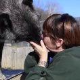 Una donna bacia un lupo, ciò che succede dopo è pazzesco