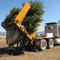Una incredibile macchina che pianta gli alberi con grande facilità