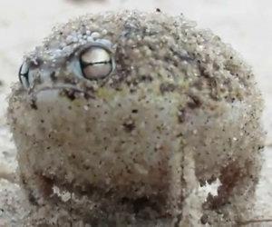 La rana più buffa del mondo