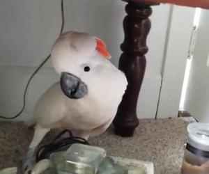 Devono portare il pappagallo dal veterinario, la sua reazione è forte
