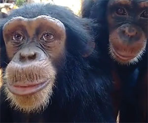 Questa scimmia ha stupito tutti: guardatele gli occhi e capirete perchè