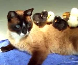 Questa strana famiglia esiste veramente, ecco la loro quotidianità