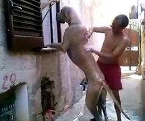 Lavare il cane in modo epico