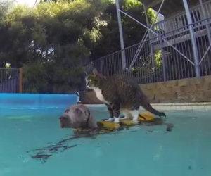 Ciò di cui è capace questo incredibile gatto ti lascerà senza parole