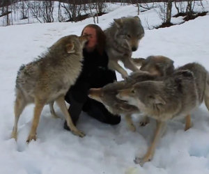 Lupi rivedono la padrona dopo vari mesi