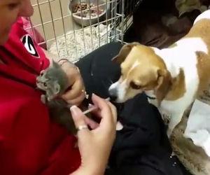 Donna cerca di allattare un gatto orfano ma guardate cosa fa il cane