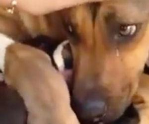 Mamma salvata con i suoi cuccioli, guardate bene i suoi occhi...