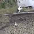 Mamma gatta capisce il pericolo e salva la vita al suo piccolo