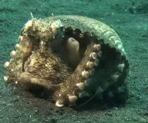 Può sembrare un normale mollusco ma ecco cosa c'è all'interno