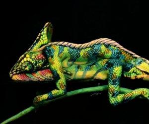 Sembra un semplice camaleonte, ma aspettate che inizi a muoversi