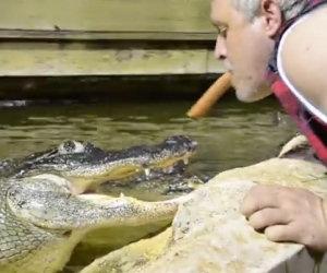 Nutrire il coccodrillo in modo folle