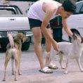 Ogni giorno scende in strada e pulisce tutti i cani randagi