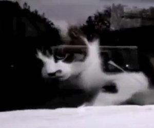 Ogni giorno questo gatto sfida il postino che porta le lettere