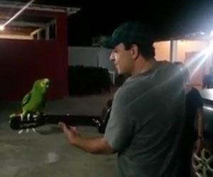 Un uomo inizia a suonare la chitarra, il pappagallo duetta con lui