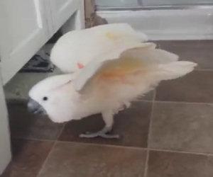 Un pappagallo si lamenta del gatto di casa, ecco la conversazione