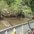 Pesca l'anaconda più grande mai vista