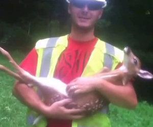 Piccolo cervo vuole stare in braccio