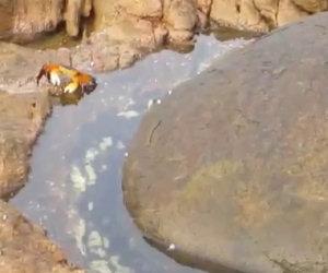 Sta filmando un granchio, ciò che accade dopo è incredibile
