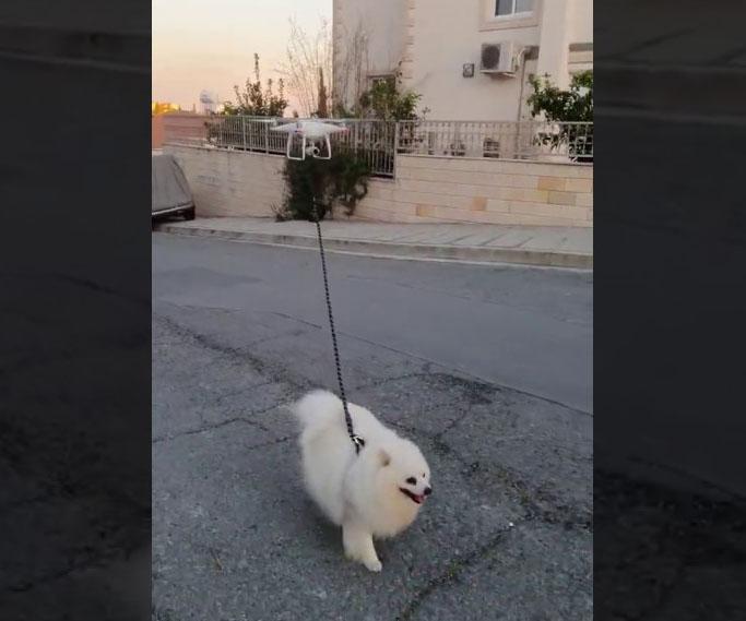 Portare a spasso il cane in tempo di quarantena