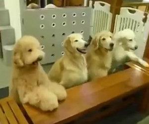 La padrona si avvicina con le ciotole ed ecco cosa fanno i cani