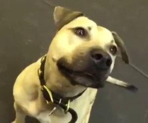L'amore di questo cane per la pizza va oltre ogni aspettativa