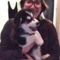 Ciò che fa questo cucciolo di husky fa morire dalle risate