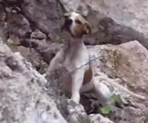 Cane abbandonato nel burrone vede i suoi salvatori, ecco la sua reazione