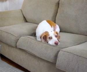 Il cane è annoiato, ma il suo padrone sta per fargli una sorpresa