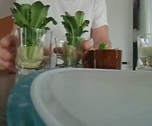 Sapevi che si può rigenerare una lattuga in casa? Ecco come!