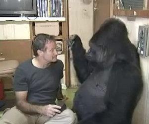 Robin Williams ed il gorilla Koko