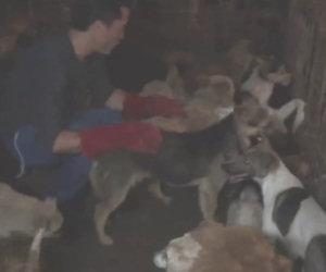 Salva in una notte oltre 1000 cani destinati ad un massacro in Cina
