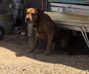 Per 3 anni vede un cane sempre legato in catena, ecco come lo salva