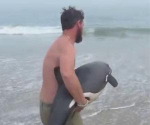Il bellissimo salvataggio di un tenero delfino spiaggiato