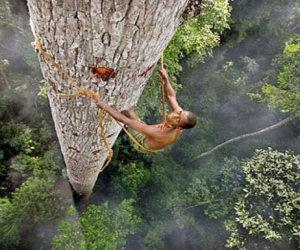 Un uomo si arrampica su un albero di 40 metri, ecco perchè...