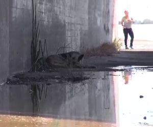 Scendono nel canale e salvano un cane che dorme lì