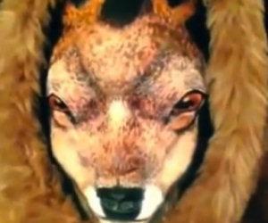 Può sembrare un cervo, ma aspetta qualche secondo e vedrai...