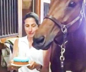 Si festeggia il compleanno del cavallo. Ecco la sua reazione!