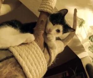 I suoi gatti gli stanno rovinando i mobili, ecco la sua soluzione