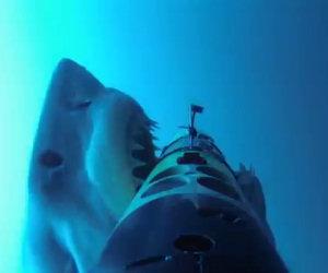 Un enorme squalo attacca il supporto della telecamera sott'acqua