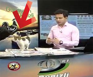 Un inaspettato ospite durante una rassegna stampa in TV