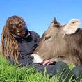 Un toro poggia la testa sulle gambe di una ragazza, è amore!