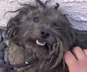 Trasformazione di un cane abbandonato