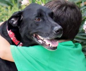 Il cane sta per morire, la famiglia decide di regalargli un giorno speciale