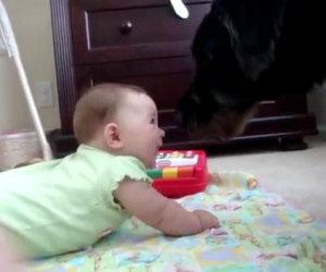 Un cane fa ridere la bambina