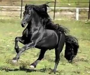 L'addestratrice lo chiama, questo cavallo vi lascerà senza parole