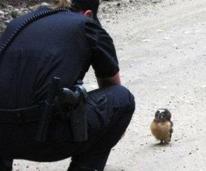 Un poliziotto di pattuglia fa un incontro che gli cambierà la giornata