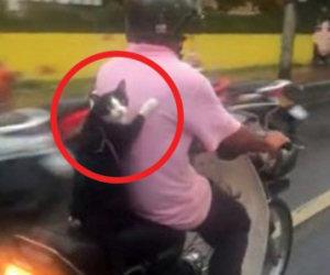 Questo motociclista ha un passeggero molto particolare